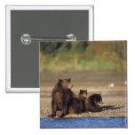 brown bear, Ursus arctos, grizzly bear, Ursus 4 Buttons