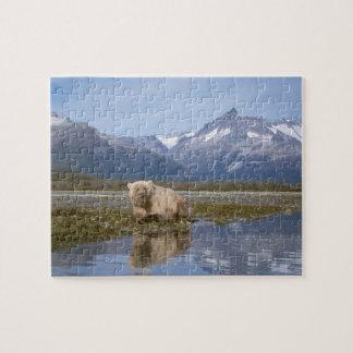 brown bear, Ursus arctos, grizzly bear, Ursus 4 Jigsaw Puzzle