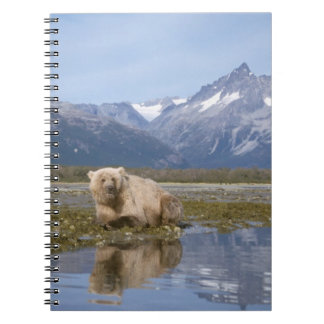 brown bear, Ursus arctos, grizzly bear, Ursus 4 Notebook