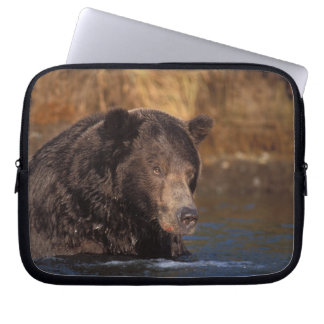 brown bear, Ursus arctos, grizzly bear, Ursus 5 Laptop Sleeve
