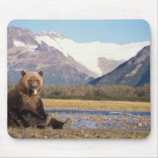 brown bear, Ursus arctos, grizzly bear, Ursus 5 Mouse Pad