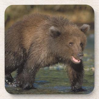 brown bear, Ursus arctos, grizzly bear, Ursus 6 Coaster
