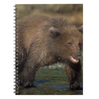 brown bear, Ursus arctos, grizzly bear, Ursus 6 Notebook