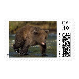 brown bear, Ursus arctos, grizzly bear, Ursus 6 Postage