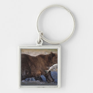 brown bear, Ursus arctos, grizzly bear, Ursus 6 Silver-Colored Square Keychain
