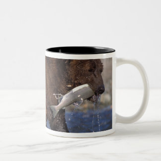 brown bear, Ursus arctos, grizzly bear, Ursus 6 Two-Tone Coffee Mug