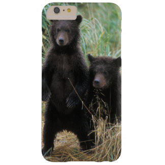 brown bear, Ursus arctos, grizzly bear, Ursus 7 2 Barely There iPhone 6 Plus Case
