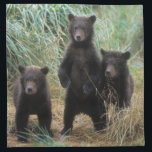 "brown bear, Ursus arctos, grizzly bear, Ursus 7 2 Cloth Napkin<br><div class=""desc"">COPYRIGHT Steve Kazlowski / DanitaDelimont.com 