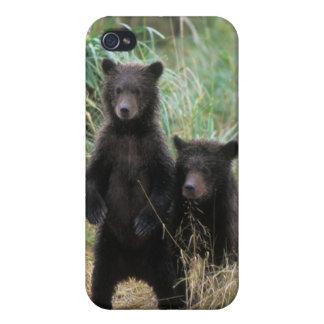 brown bear, Ursus arctos, grizzly bear, Ursus 7 2 iPhone 4/4S Cases