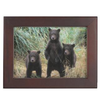 brown bear, Ursus arctos, grizzly bear, Ursus 7 2 Memory Box