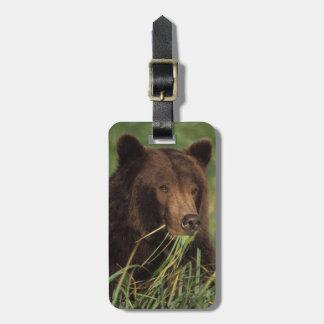 brown bear, Ursus arctos, grizzly bear, Ursus 7 Bag Tag