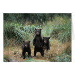 brown bear, Ursus arctos, grizzly bear, Ursus 7 Greeting Card