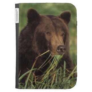 brown bear, Ursus arctos, grizzly bear, Ursus 7 Kindle Cases