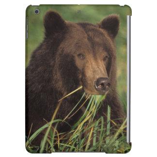 brown bear, Ursus arctos, grizzly bear, Ursus 7 Cover For iPad Air