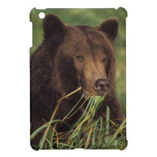 brown bear, Ursus arctos, grizzly bear, Ursus 7 iPad Mini Case