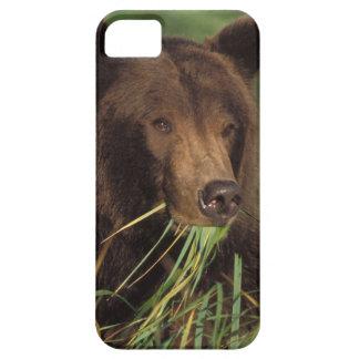brown bear, Ursus arctos, grizzly bear, Ursus 7 iPhone SE/5/5s Case