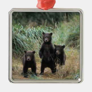 brown bear, Ursus arctos, grizzly bear, Ursus 7 Metal Ornament