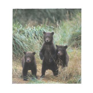 brown bear, Ursus arctos, grizzly bear, Ursus 7 Note Pad