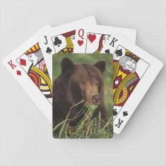brown bear, Ursus arctos, grizzly bear, Ursus 7 Playing Cards