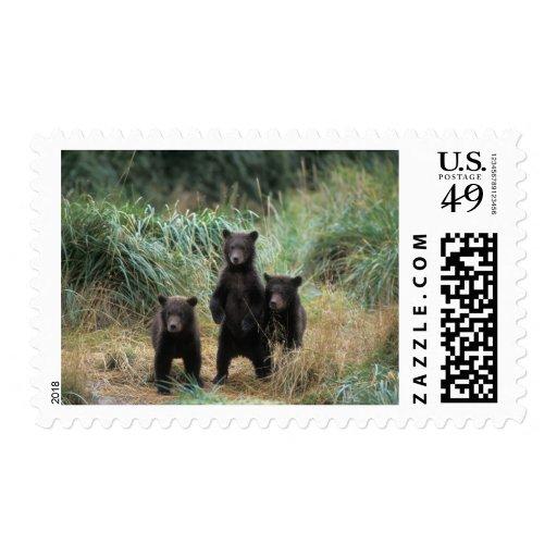 brown bear, Ursus arctos, grizzly bear, Ursus 7 Stamps