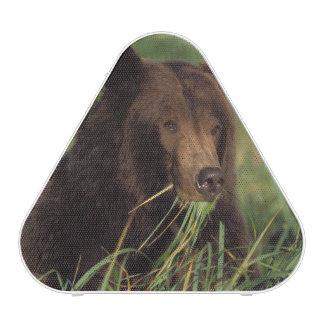brown bear, Ursus arctos, grizzly bear, Ursus 7 Speaker
