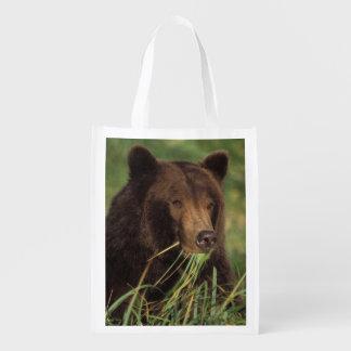 brown bear, Ursus arctos, grizzly bear, Ursus 7 Market Totes