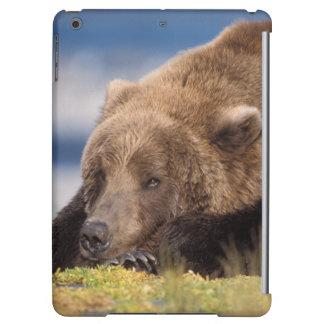 brown bear, Ursus arctos, grizzly bear, Ursus 8 Case For iPad Air