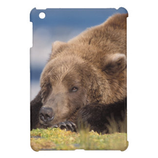 brown bear, Ursus arctos, grizzly bear, Ursus 8 Case For The iPad Mini