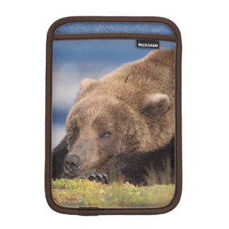 brown bear, Ursus arctos, grizzly bear, Ursus 8 Sleeve For iPad Mini