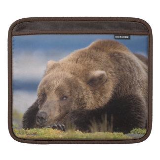 brown bear, Ursus arctos, grizzly bear, Ursus 8 Sleeve For iPads