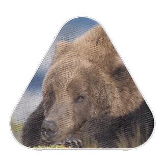 brown bear, Ursus arctos, grizzly bear, Ursus 8 Speaker