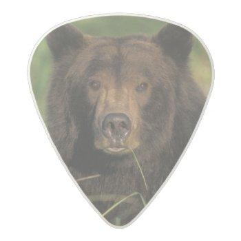 Brown Bear  Ursus Arctos  Grizzly Bear  Ursus 9 Acetal Guitar Pick by DanitaDelimont at Zazzle