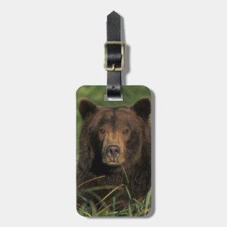 brown bear, Ursus arctos, grizzly bear, Ursus 9 Bag Tag