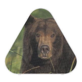 brown bear, Ursus arctos, grizzly bear, Ursus 9 Bluetooth Speaker