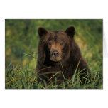 brown bear, Ursus arctos, grizzly bear, Ursus 9 Card