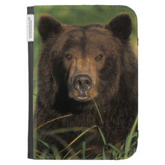 brown bear, Ursus arctos, grizzly bear, Ursus 9 Kindle Keyboard Case
