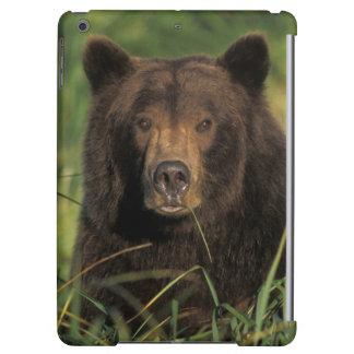 brown bear, Ursus arctos, grizzly bear, Ursus 9 Case For iPad Air