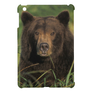 brown bear, Ursus arctos, grizzly bear, Ursus 9 Cover For The iPad Mini