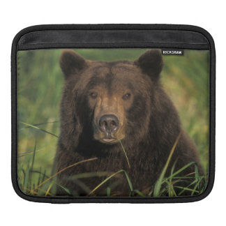 brown bear, Ursus arctos, grizzly bear, Ursus 9 Sleeves For iPads