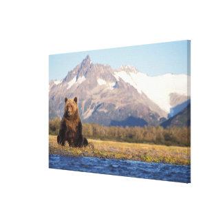 brown bear, Ursus arctos, grizzly bear, Ursus Stretched Canvas Prints