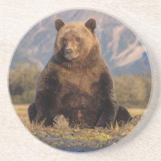 brown bear, Ursus arctos, grizzly bear, Ursus Drink Coaster