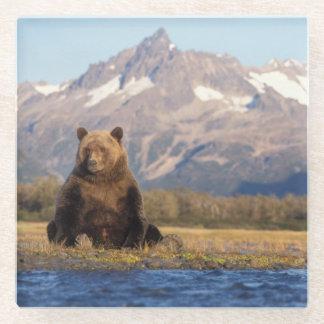 brown bear, Ursus arctos, grizzly bear, Ursus Glass Coaster