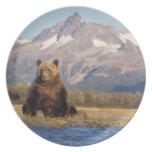 brown bear, Ursus arctos, grizzly bear, Ursus Dinner Plate
