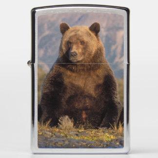 brown bear, Ursus arctos, grizzly bear, Ursus Zippo Lighter