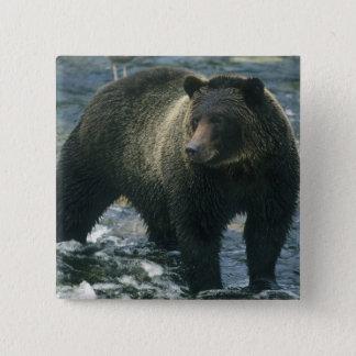 Brown Bear, Ursus arctos), hunting salmon, Pinback Button