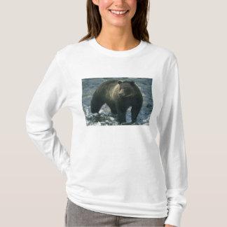 Brown Bear, Ursus arctos), hunting salmon, T-Shirt