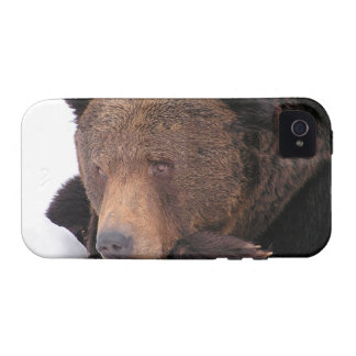 Brown Bear Winter Vibe iPhone 4 Case