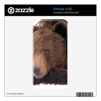 Brown Bear Winter Skins For iPhone 4