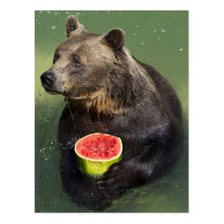 Brown Bear with Water Melon Postcard