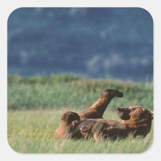 Brown Bears at play, Ursus arctos, Alaska Stickers